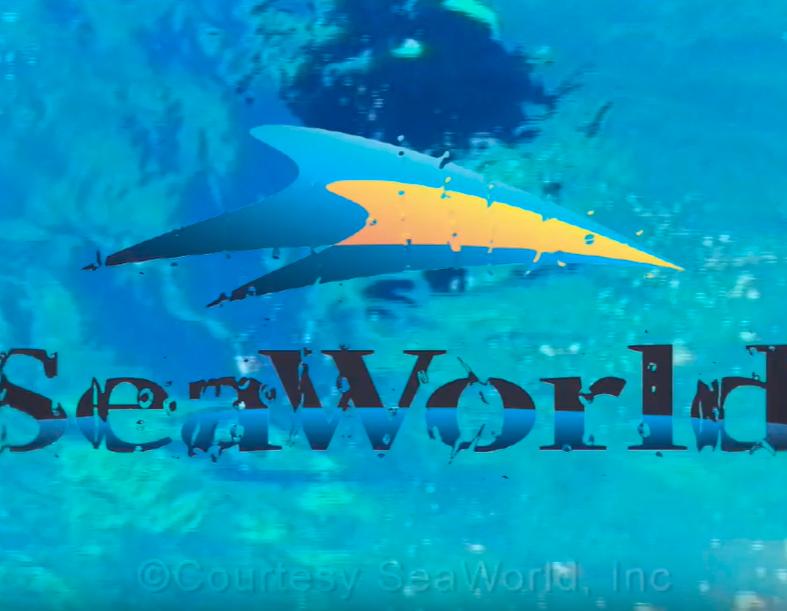 Video ficticio SEAWORLD
